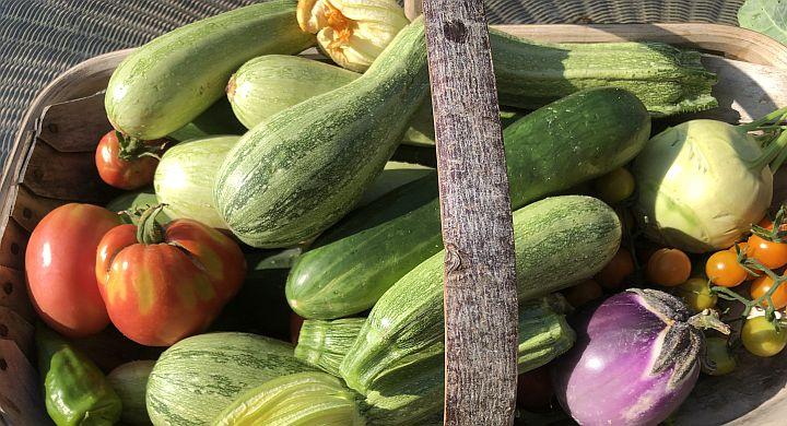 Organic food and Greenscents