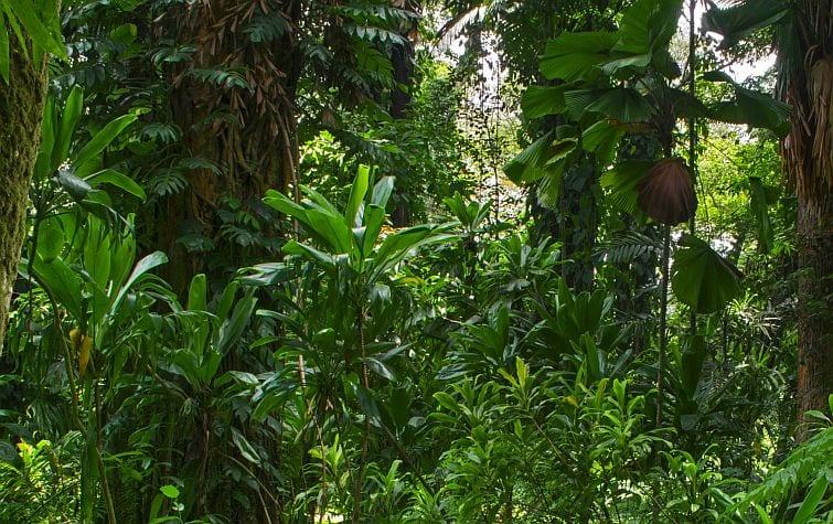 rainforest contains palm oil free