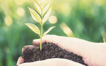 Greenscents organic ingredients