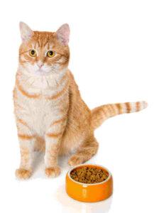 Greenscents organic pet products