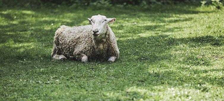 certified organic wool
